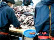 北海道室蘭沖の漁01|鳴海屋