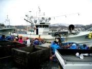 北海道室蘭沖の漁02|鳴海屋