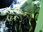 北海道室蘭沖の漁03|鳴海屋